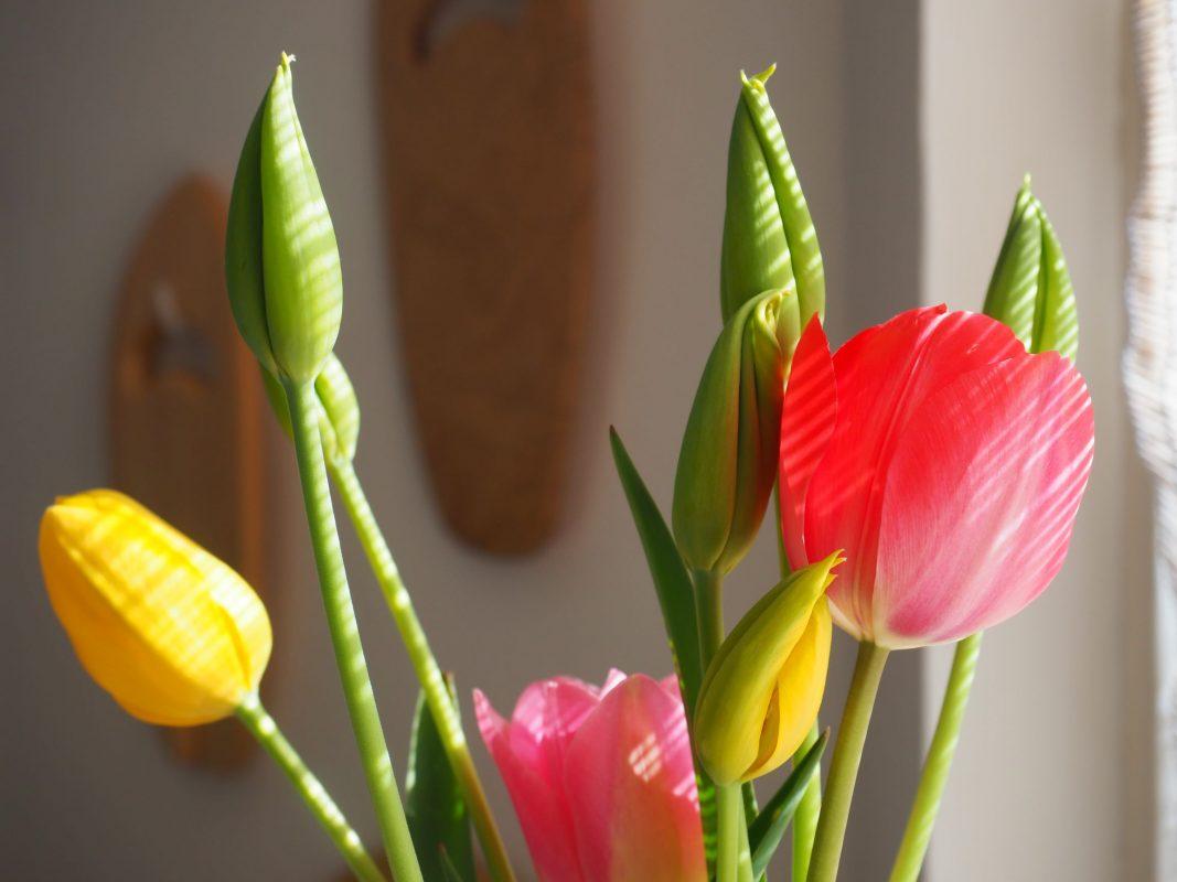 lente tulpen en groene thee